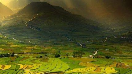 Впечатляющие снимки рисовых полей со всего мира (Фото)