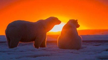 Волшебный закат на Аляске и белые ведмеди