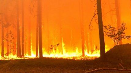 Якутия в огне - пожар подобрался к нефтебазе и уничтожил лагерь волонтеров (видео)