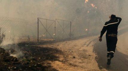 Лесные пожары в Алжире унесли жизнь 42 человек (фото, видео)