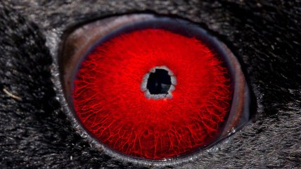 Глаза животных - взгляд, от которого замирает сердце (Фотогалерея)