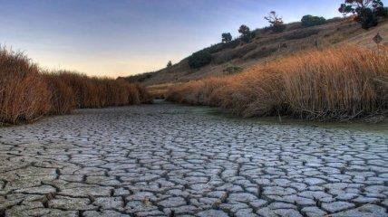 Засуха принесла Крыму убытки на треть миллиарда гривен