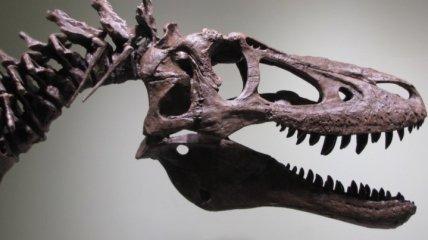 На eBay пытаются продать окаменелость тираннозавра рекса