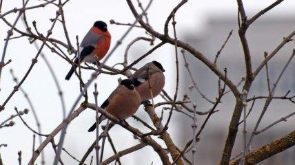 Киев атакуют дикие птицы