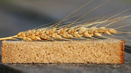 Экспорт агропродукции побил рекорды и достиг почти $18 млрд