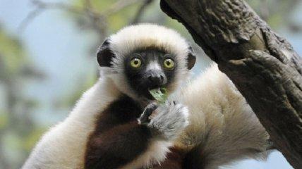 Lacoste изменила логотип ради вымирающих животных