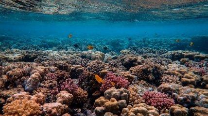 Большой Барьерный риф потерял половину кораллов с 1995 года