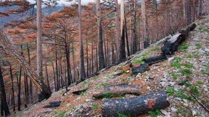 В Крыму государству вернули 10 га лесоугодий