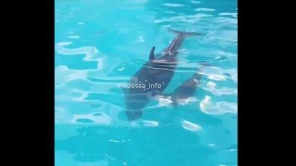 В одесском дельфинарии пополнение: дельфин Пенелопа стала мамой в третий раз (видео)