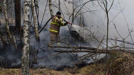 В Чернобыльской зоне опять пожар: горят 3 га леса