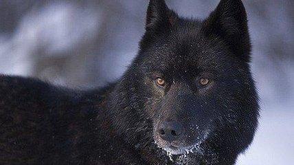 В российском городе ввели режим чрезвычайной ситуации из-за бродячих собак