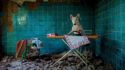 Необычное путешествие фотографа и ее пса (Фото)