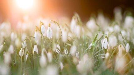 Какой праздник 1 марта: народные приметы и запреты