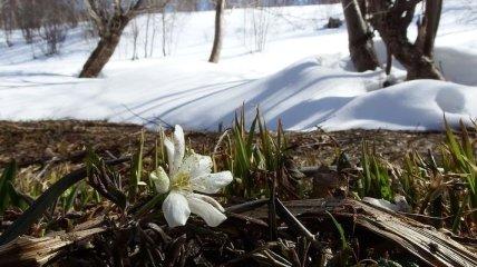 От -15° ночью до 7° тепла днем: прогноз погоды на 3 марта в Украине