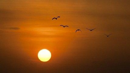 День летнего солнцестояния 2021: астролог сделала предупреждение для четырех знаков зодиака