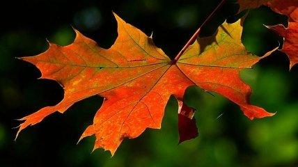 Какой завтра праздник: что можно и нельзя делать 10 ноября