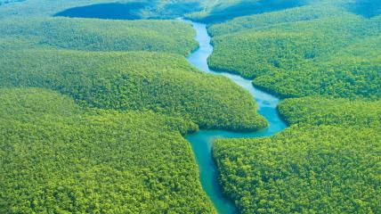 Площадь амазонских лесов - 6 млн кв км.