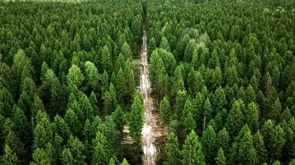 Дерева повинні були б садити десятками кожну годину, щоб посадити мільярд за три роки