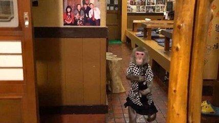 В этом японском баре вас обслужит милая обезьяна-официантка (Видео)