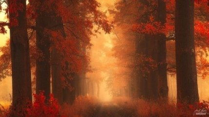 Магия осеннего леса в снимках Янека Седлара (Фото)