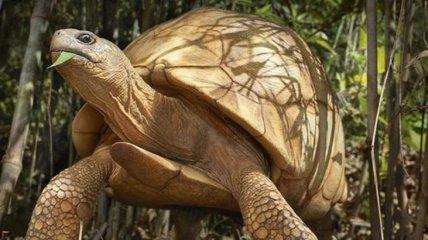 Стоит задуматься: исчезающие виды животных, которых мы все еще можем спасти (Фото)