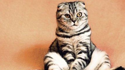 Повод для улыбки: фотогеничные милые коты
