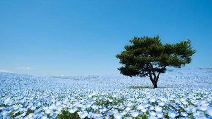 Сказочный парк в Японии (Фото)