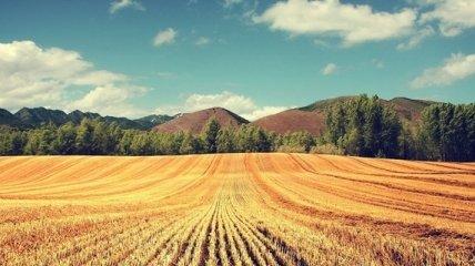 Земельная реформа станет турбодрайвером тысяч конфликтов в ближайший год - журналист