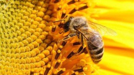 Госпродпотребслужба выяснила, почему массово гибнут пчелы