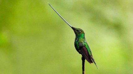 Животные с несоразмерными частями тела (Фото)