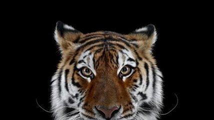 """""""Взгляд в упор"""": портреты диких животных в объективе Брэда Уилсона (Фото)"""