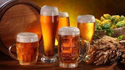 Калорийность пива и влияние напитка на организм