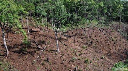 Экс-чиновник Тернопольской ОГА незаконно изъял 4 га земли