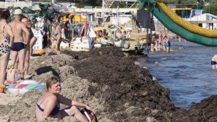 """""""Кучи навоза"""" и пустые пляжи: как отдыхают в оккупированном Крыму"""