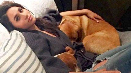 СМИ: Меган Маркл и принц Гарри завели собаку