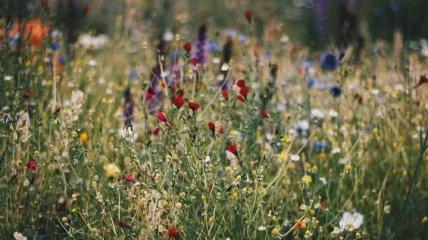 Борщевик Сосновского, белладонна и дурман: аллерголог рассказал, контакта с какими растениями стоит избегать
