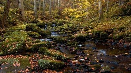 На Прикарпатье разыскивают в лесу 21-летнего юношу с шизофренией