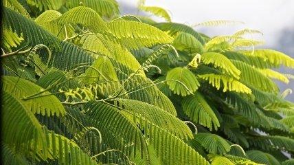 Упрощение ключевых шагов фотосинтеза: биологи вывели новое растение