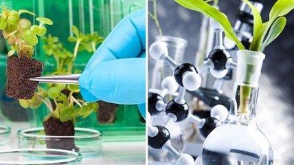 Агентство передовых исследований DARPA создает растения-шпионов