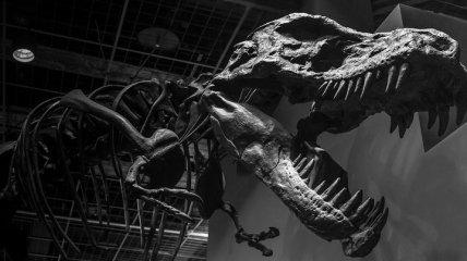 Ученым понадобилось 20 лет, чтобы определить самого крупного тираннозавра рекса