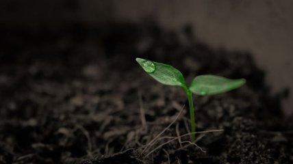 Может вызвать голод: изменение климата влияет на сельскохозяйственную почву