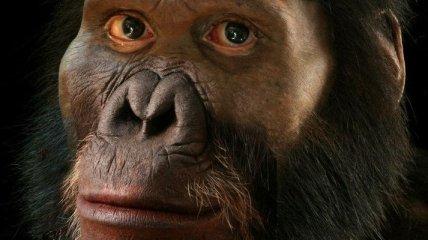 В Африке обнаружен древнейший гоминид