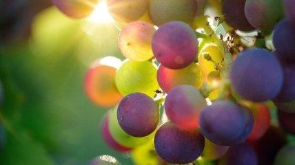 Вкусный и полезный: виноград может помочь гипертоникам