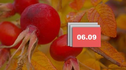 Праздник 6 сентября