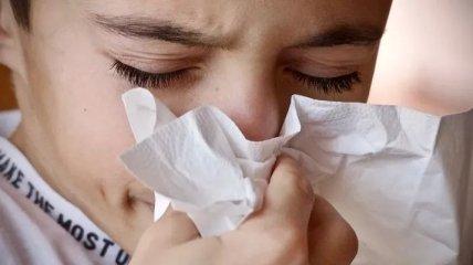 Продукты, которые смягчают симптомы аллергии