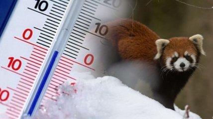 Похолодание и дождь со снегом: синоптик озвучила прогноз погоды на 15 марта в Украине