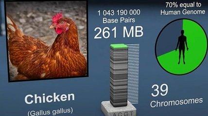 Кто мы: на видео показали, на сколько геном человека схож с растениями и животными (Видео)