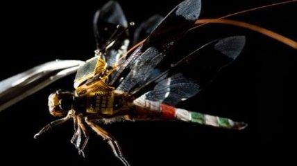 Ученые создали из стрекозы киборга и заставили ее лететь, как беспилотник