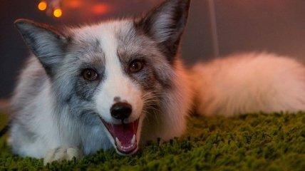 Эти забавные звери: прикольные фото про животных