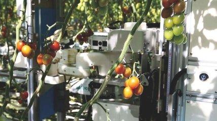 Компания Panasonic научила роботов работать на ферме (Видео)